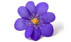 Perfumes con Olor a Violeta
